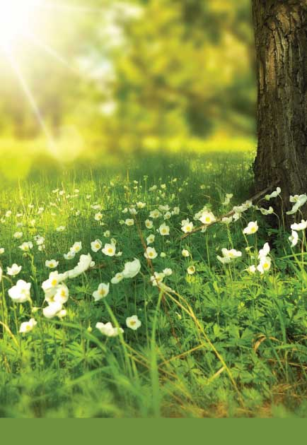 Spring Renewal I